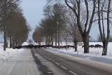Niesamowity widok! Stado kilkudziesięciu żubrów przebiegło przez drogę pod Krynkami (zdjęcia, wideo)