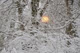 Prognoza pogody na święta. Czy będzie śnieg? Znamy odpowiedź!