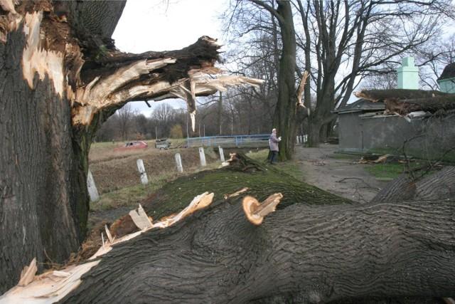Najczęstszą przyczyną wyjazdów strażaków są - póki co - odłamane konary drzew.