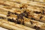 Rekowo Lęborskie. Kilkanaście tysięcy pszczół z ponad 40 pasiek padło po opryskach