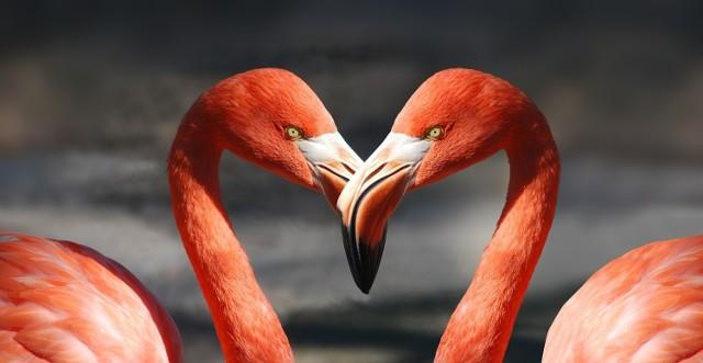 Wiersze miłosne na Walentynki