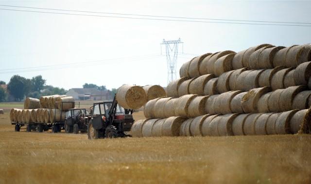 Osoby bezrobotne na stażu w gospodarstwach rolnych? Czemu nie. Zabiegają o to izby rolnicze