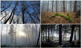 Wrocławskie lasy. Polecamy na zimowy spacer. Znacie je wszystkie? [LISTA, GDZIE SĄ POŁOŻONE]
