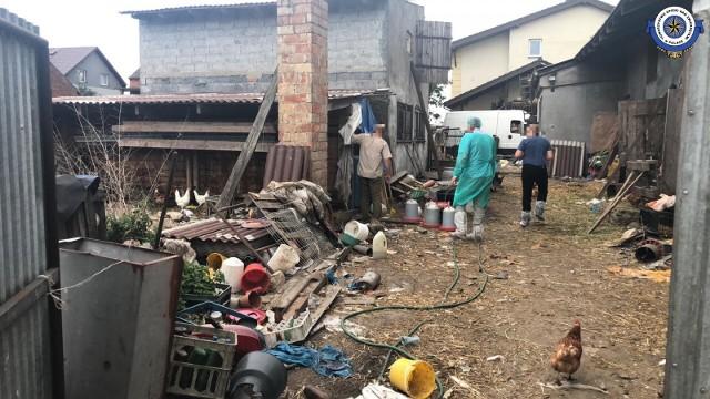 Inspektorzy znaleźli w gospodarstwie w Młynach straszny brud, nieporządek i fatalne warunki dla zwierząt.