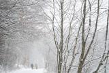 Zimowa Dolina Będkowska. Bajkowa sceneria na Jurze Krakowsko-Częstochowskiej [ZDJĘCIA]