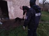 Skrajnie zaniedbane psy w Trzebielinie! Policja odebrała je właścicielowi