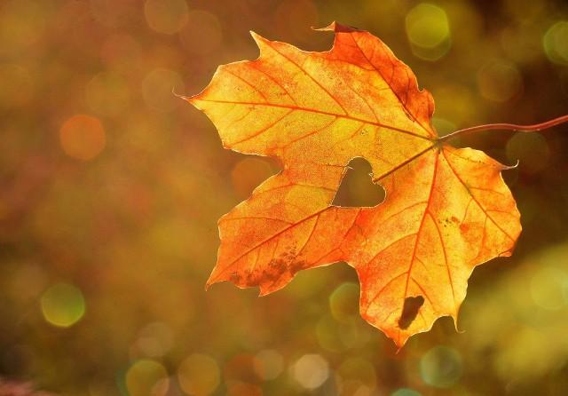 Jesień astronomiczna wypadnie dzień wcześniej niż kalendarzowa