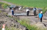 Wykopaliska w Ostrowie pod Gniewkowem. Co odkryli archeolodzy? [zdjęcia]