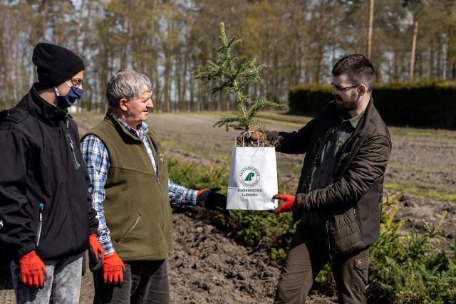 """W ramach akcji """"Posadź swoje drzewko"""" w Nadleśnictwie Lutówko rozdano ok. 4 tys. sadzonek świerku"""