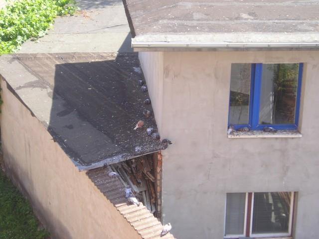 Codziennie mieszkańcy bloku walczą z gołębiami i przyznają, że mają tego już dość.