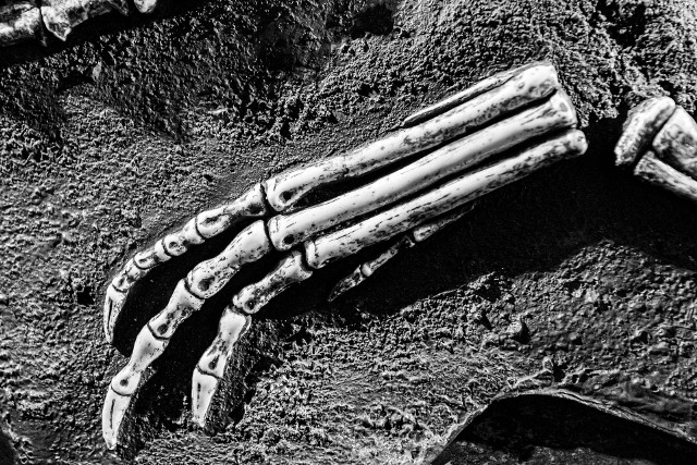 Paleontologiczna sensacja na Opolszczyźnie. W miejscowości Kocury odkryto nowy gatunek prehistorycznego aetozaura!