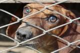 54-latek z powiatu hajnowskiego oskarżony o gwałcenie psa i znęcanie się nad synem