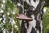 Jest takie drzewo w zielonogórskim parku Tysiąclecia, na którym każdego roku przybywa... butów. Co to za tradycja w centrum miasta?