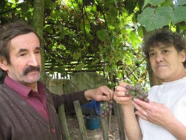 - Szkoda by nam było naszych winogron, które hodujemy od lat - mówią Stefania i Ryszard Antoszkowie. - Przecież jak zabiorą nam działkę nie uda się ich przenieść w inne miejsce - dodają.