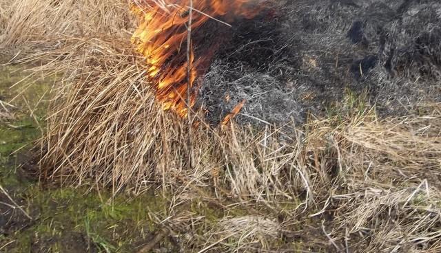 Zdjęcia z podpalacza