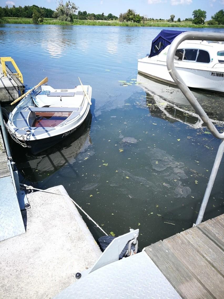 Nogat będzie regularnie monitorowany. RZGW sprawdził stan rzeki po doniesieniach o nieznanej zawiesinie