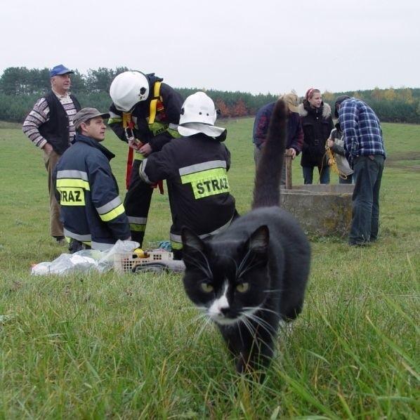 Akcji ratowania kota ze studni przyglądały się inne koty - może nawet rodzina sprawcy zamieszania