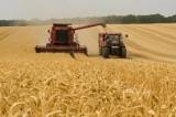 Najtańsze maszyny rolnicze na sprzedaż w Podlaskiem. Te ogłoszenia to prawdziwe perełki cenowe! [ZDJĘCIA, CENY, NOWE OFERTY] 1.11.2020