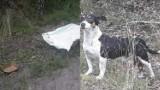 Pies zawiązany w worku został znaleziony w okolicy Rojewa