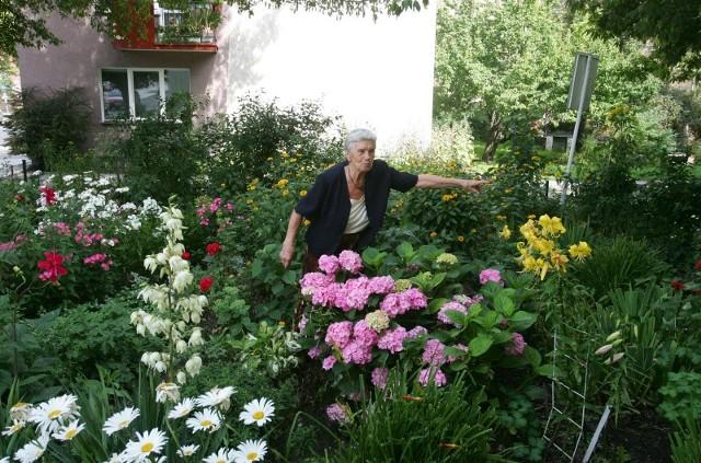- Te kwiaty to moja duma - opowiada pani Irena. - W przyszłym roku będą też białe. Na razie są małe, ale wyrosną na tak wielkie, jak te różowe.