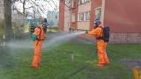 Wyciek amoniaku na osiedlu w Puławach. Interweniowało pięć zastępów straży pożarnej