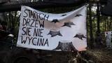 Wycinka Puszczy Białowieskiej. Lasy Państwowe chcą wyciąć ponad sto tysięcy drzew. Ekolodzy protestują