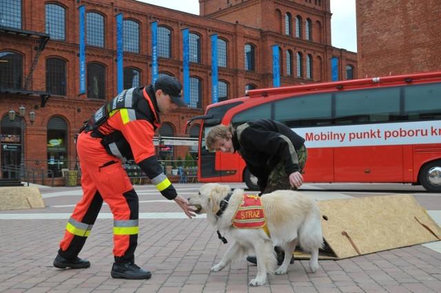 Psy z Grupy Ratownictwa Specjalistycznego łódzkiej OSP szkolone są do udziału w akcjach poszukiwawczych