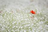 Maj w ogrodzie. Jakie kwiaty sadzimy w maju na balkonie i w ogrodzie? Sprawdź!