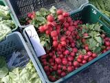 Na rynku przy ul. Owocowej w Zielonej Górze jest drogo, czy tanio? Sprawdzamy najnowsze ceny