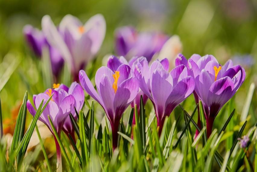 W marcu bardzo wiele zależy od pogody. Wiosna kalendarzowa...