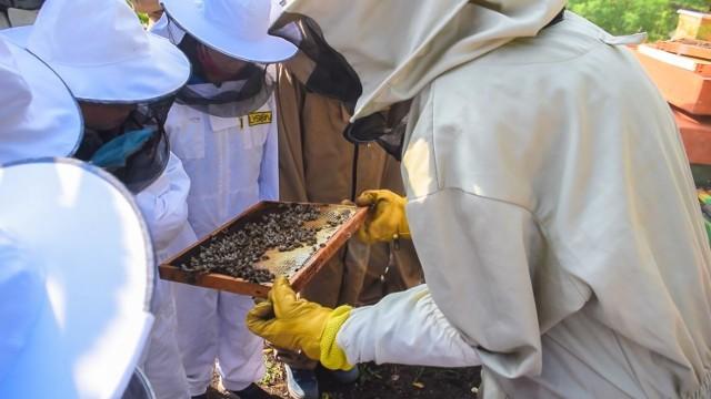 20 maja obchodzimy Dzień Pszczoły.
