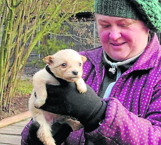 Magda ratuje zwierzęta i prosi dobrych ludzi o domy dla nich.