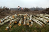 Znika coraz więcej drzew! W ciągu ostatnich 20 lat wycięto dwa razy więcej drzew niż wcześniej. Lasy Państwowe zarabiają ogromne pieniądze