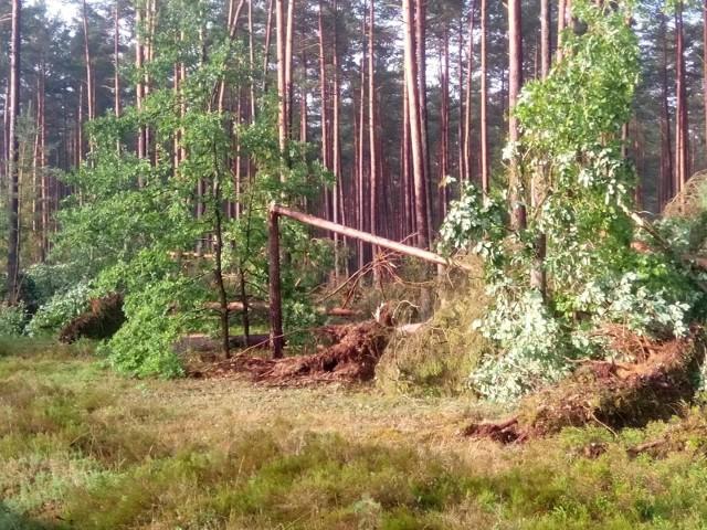 Burza nad powiatem bytowskim, ewakuacja obozów koło Kościerzyny, połamane drzewa. Na szczęście nic nikomu się nie stało. Dodajmy, że w ostatnim tygodniu w całym regionie (Bytów, Kościerzyna, Chojnice) odbyły się spotkania uczestników obozów z policjantami.
