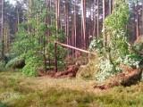 Noc grozy. Burza na Kaszubach, ewakuacja obozów, połamane drzewa (ZDJĘCIA)
