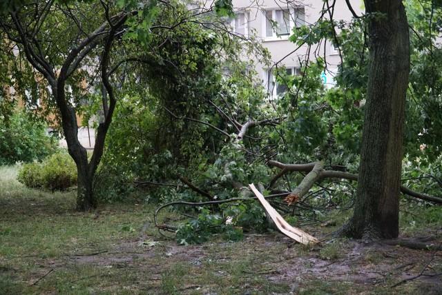 Połamane drzewo po nawałnicy w Poznaniu