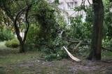 Gwałtowne burze w Polsce. Powyrywane drzewa, zalane ulice, ewakuowane obozy harcerskie