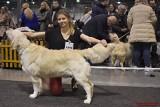 Blisko 3 tysiące psów, 240 ras! Międzynarodowa Wystawa Psów Rasowych CACIB Katowice 2019 w EXPO Silesia w Sosnowcu ZDJĘCIA