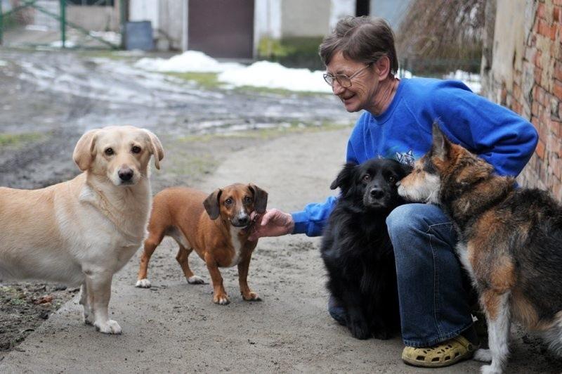 Sołtyska Głogusza Krystyna Smagło należy do osób, które ostatnio adoptowały psa. Jak się okazuje niejednego. Gdy zajeżdżamy do jej zagrody z miejsca opadają nas cztery czworonogi.