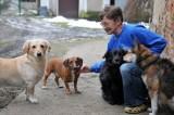 Sulechów: do serca przytul psa