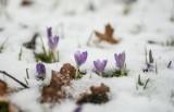 Niż Elżbieta nad Polską. IMGW wydało ostrzeżenie o opadach śniegu dla 10 województw: śnieg i marznący deszcz [pogoda 29.03.2018]
