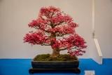 Drzewko bonsai – polecamy rośliny łatwe w kształtowaniu miniaturowych drzew