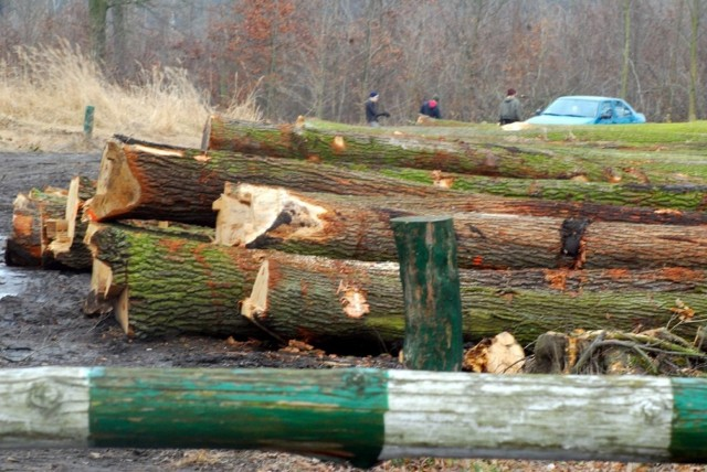 Wycinka drzew pod obwodnicę Jarocina