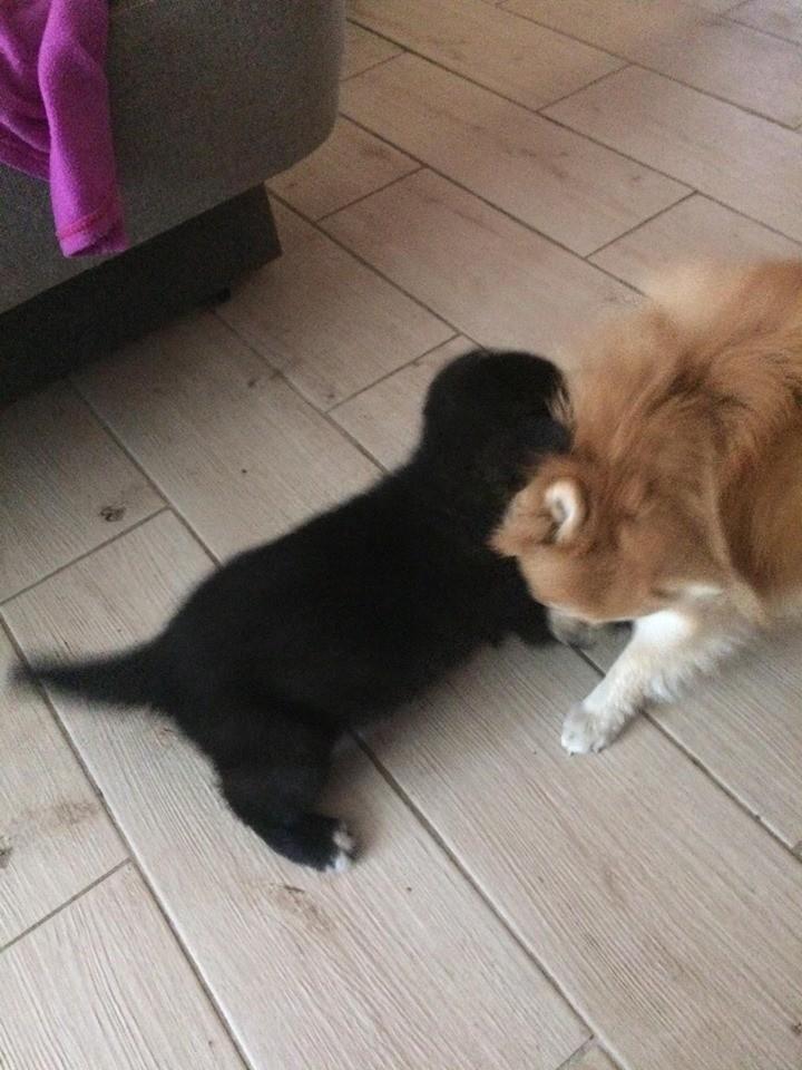 Podrzuciła psa, bo sikał jej w domu! Bytowianką zajęła się już policja