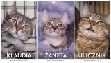 Koty do adopcji w Gdyni. Kilkadziesiąt zwierzaków w Ciapkowie czeka na wspaniałą rodzinę!
