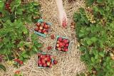Czy można zatrudnić pracownika z Ukrainy do zbiorów w Polsce? To musisz wiedzieć o pracowników sezonowych
