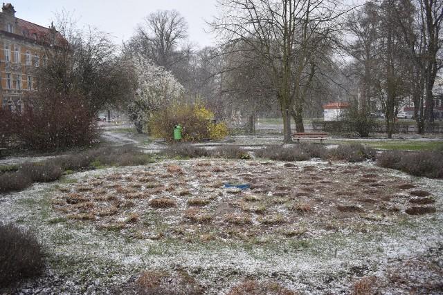 Tak obecnie wygląda park w centrum miasta. Trzeba przyznać, że do pięknych to miejsce nie należy...