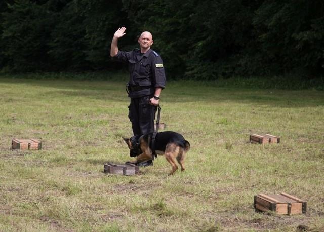 Policyjny pies w akcji