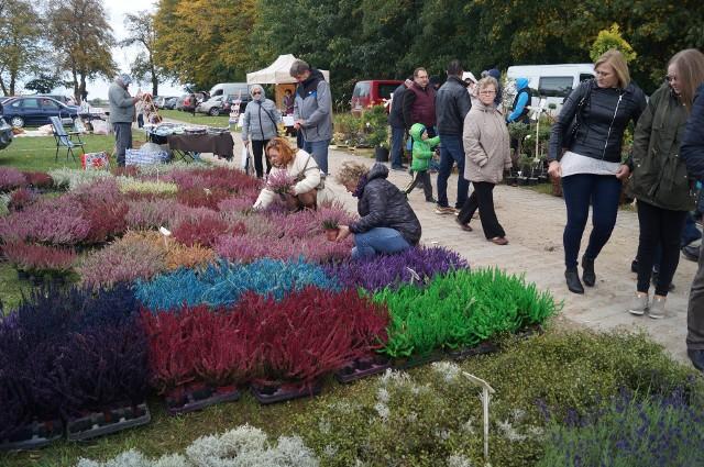 Wrzosy, byliny, drzewka i krzewy ozdobne oraz owocowe - wybór roślin na targach ogrodniczych w Szepietowie był ogromny