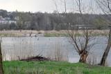 Otoczenie zalewu Pasternik w Starachowicach już niebawem zmieni się nie do poznania. Otwarto oferty przetargowe (ZDJĘCIA)